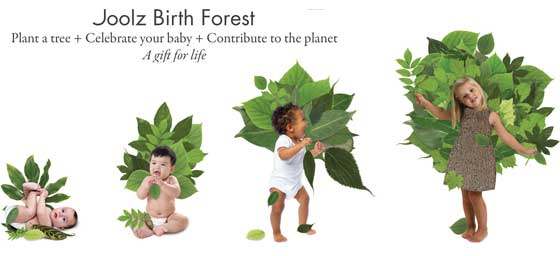 joolz birth forrest